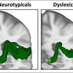 Nature Neuroscience & Society Neuroscience Articles